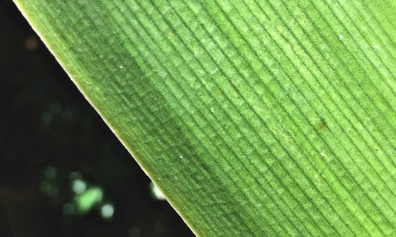 piece of a green leaf